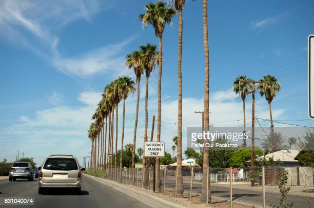 Palm trees at street of Calexico, Imperial county, California, USA