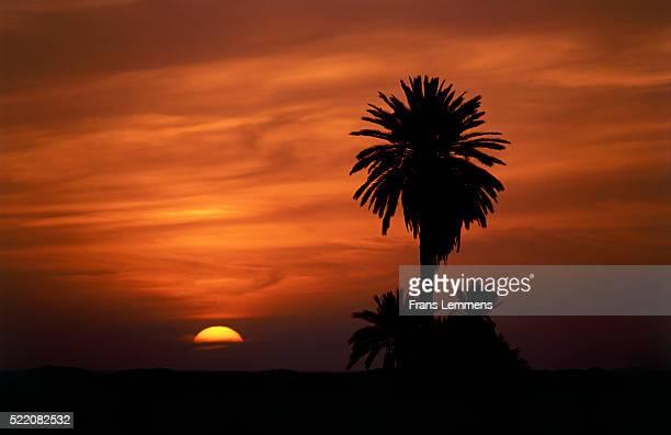 Palm trees at sunset, Douz, Tunisia