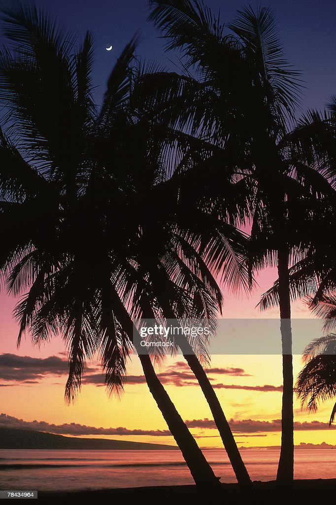 Palm trees at sunset : Stockfoto
