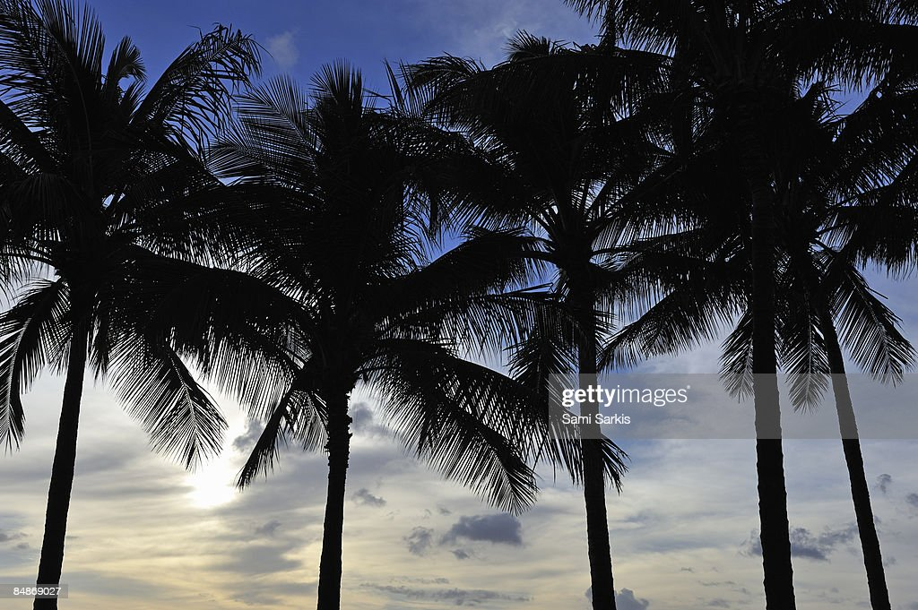 Palm trees at sunset : Stock Photo