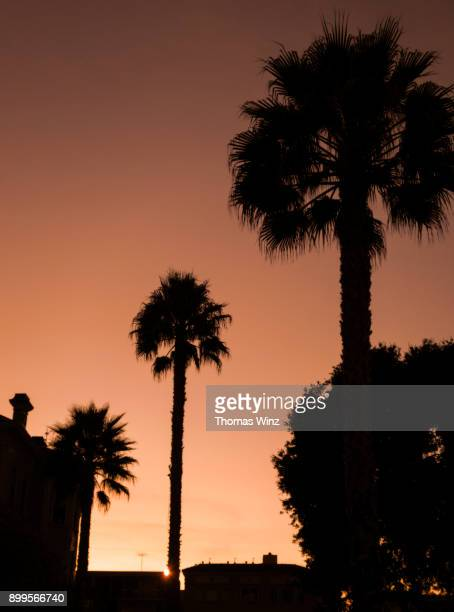 palm trees at sunset - oakland california stock photos and pictures