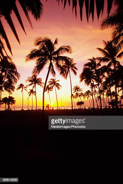 Palm trees at sunset, Waikiki Beach, Honolulu Oahu, Hawaii, USA