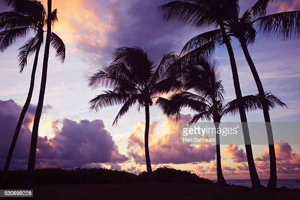 Palm trees at sunset; Wailea, Maui, Hawaii, United States of America