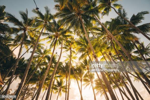 palm trees australia
