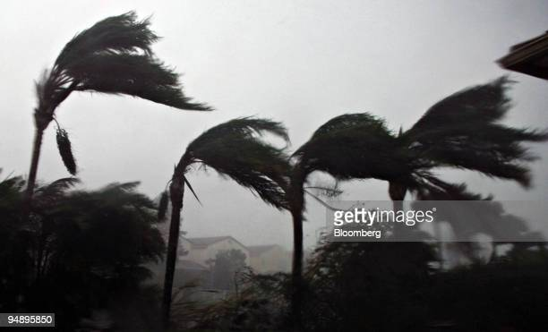 Palm trees bend in the winds of Hurricane Wilma as the storm makes landfall in Plantation Florida Monday October 24 2005 Hurricane Wilma crossed...