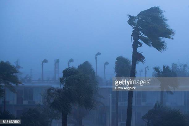 Palm trees blow in the rain and wind from Hurricane Matthew October 7 2016 in Ormond Beach Florida Overnight Hurricane Matthew was downgraded to a...