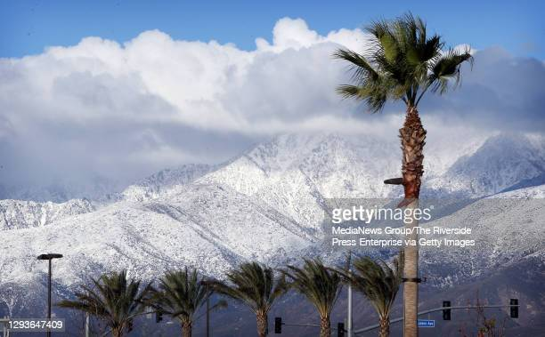 Palm trees blow in the wind against the snow-capped San Gabriel Mountains in Rialto on Tuesday, Dec. 29 after the first storm of the winter hit the...