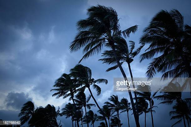 Palm trees blowing in a tropical storm