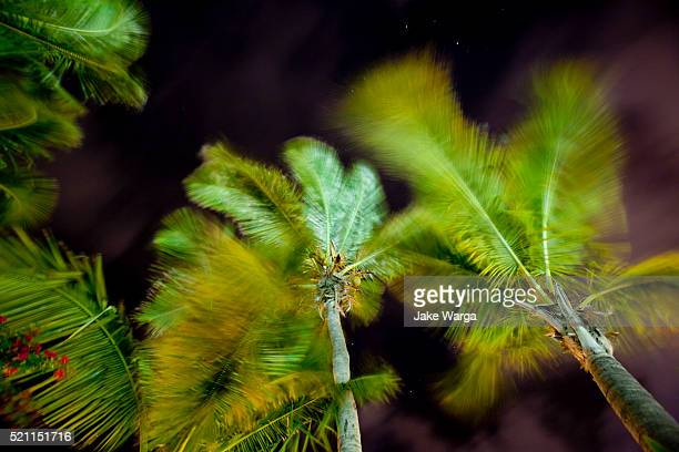palm trees blowing in the wind at night - jake warga fotografías e imágenes de stock