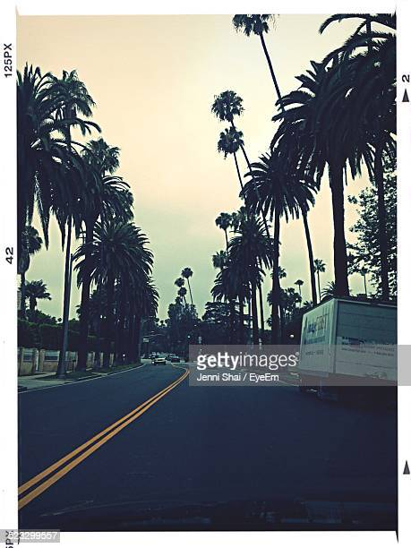 Palm Trees Both Sided Of A Road