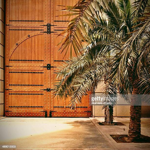 Palm trees by closed wooden door