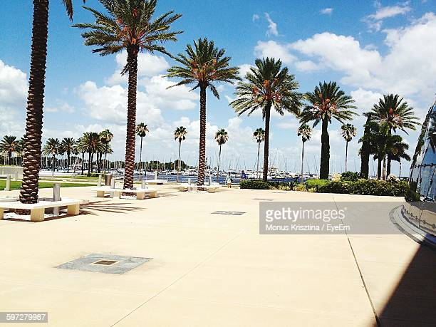 palm trees by footpath leading sea - st. petersburg florida stock photos and pictures