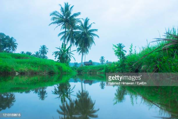 palm trees by lake against sky - rahmad himawan stock pictures, royalty-free photos & images