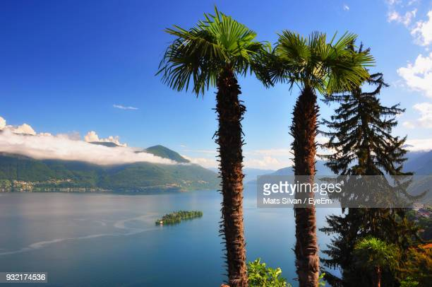 palm trees by lake against sky - kanton tessin stock-fotos und bilder