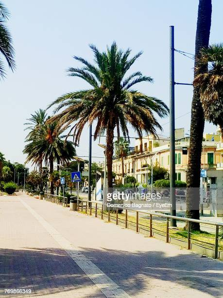 palm trees by road against clear sky - bagnato stock-fotos und bilder