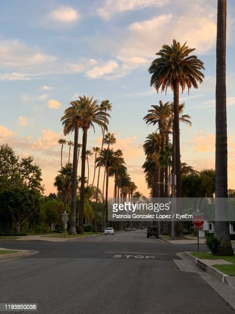 palm trees by road against sky during sunset - beverly hills california stock pictures, royalty-free photos & images