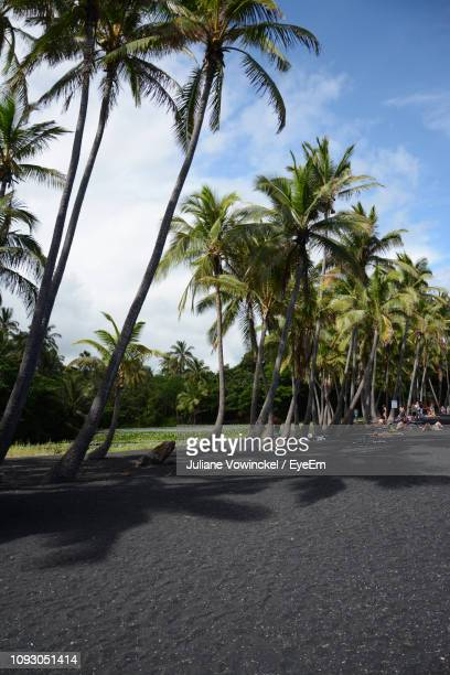 palm trees by road against sky - punalu'u_beach stock pictures, royalty-free photos & images