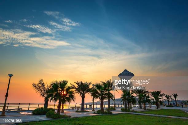 palm trees by sea against sky during sunset - saudi arabia stock pictures, royalty-free photos & images