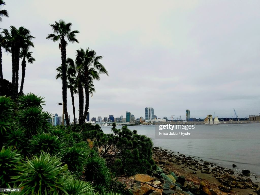 Palm Trees By Sea Against Sky In City : Stock Photo