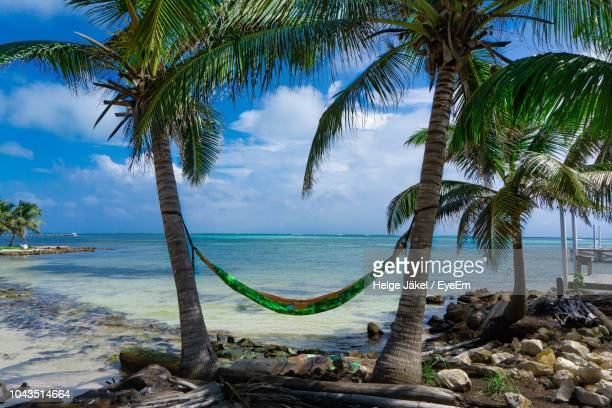 palm trees by sea against sky - belize stock pictures, royalty-free photos & images