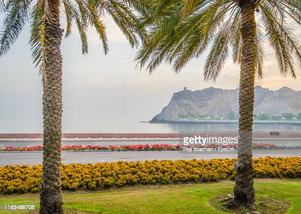 palm trees by sea against sky - date palm tree stock pictures, royalty-free photos & images