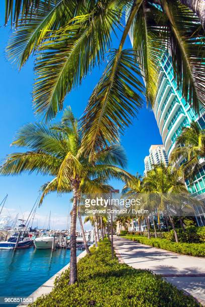 palm trees by sea against sky - florida usa stock-fotos und bilder