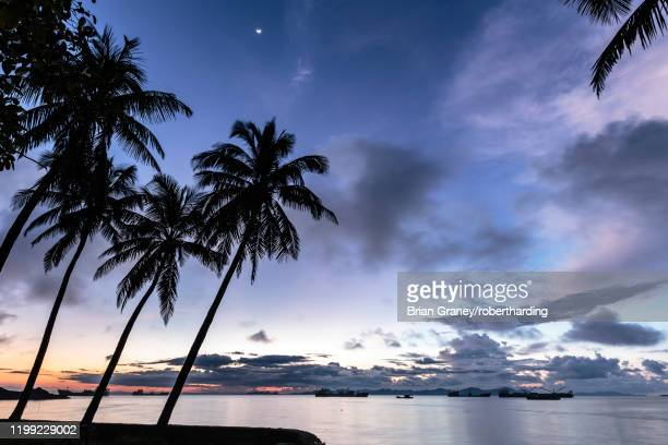 palm trees by sittwe harbour before sunrise, with clouds and small moon in the dawn sky, sittwe, myanmar (burma), asia - sittwe stock pictures, royalty-free photos & images