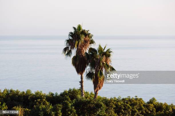 palm trees by the sea - yeowell stock pictures, royalty-free photos & images