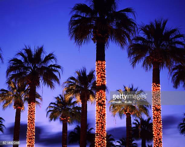 Christmas Lights In Palm Trees.World S Best Palm Tree Christmas Lights Stock Pictures