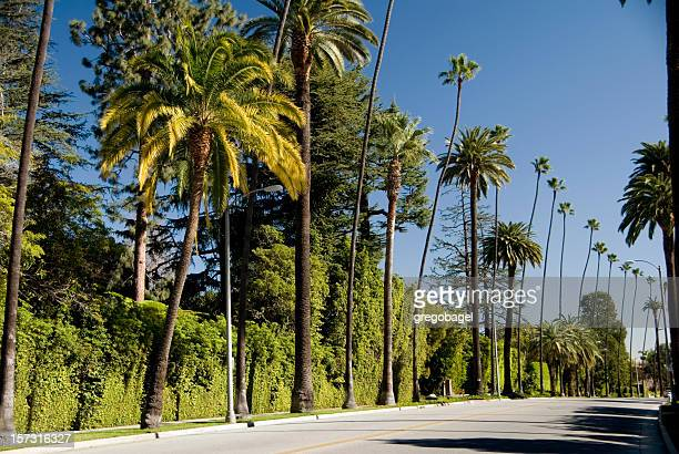 Palm trees down Beverly Hills