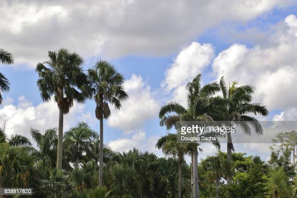 Palm Trees extend over the tropical forest