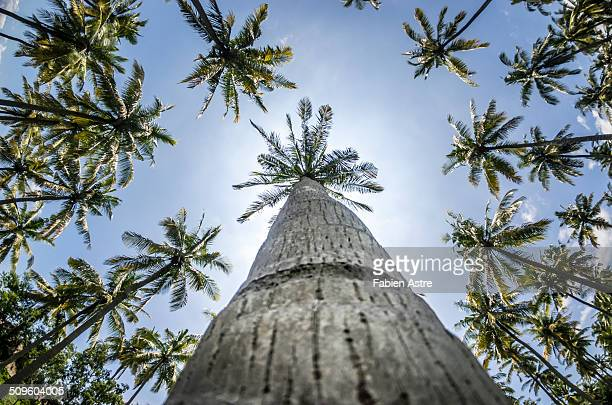 Palm trees from low angle view