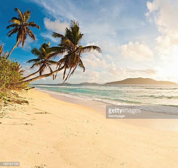 Palm trees golden sand beach tropical island shore