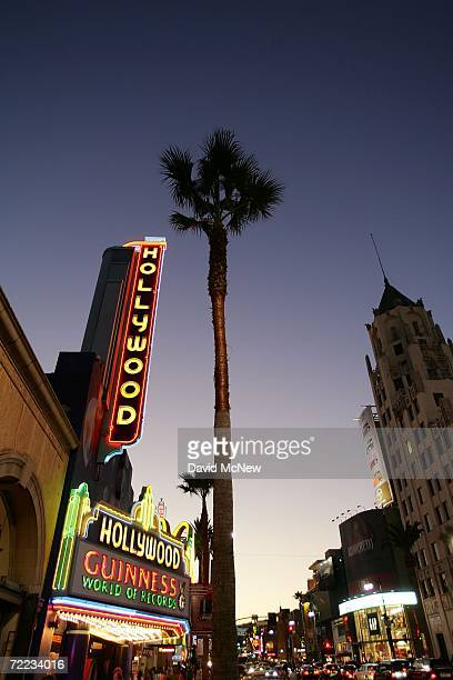 Palm trees grow near Hollywood and Highland as many of the areas palms fade into history because of a fatal fungus old age and city plans to replace...