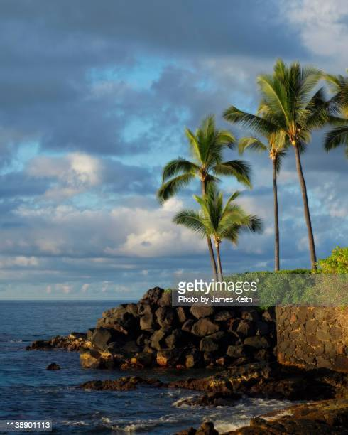 Palm trees grow on a lava outcrop overlooking the ocean on a tropical island.