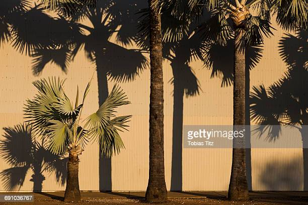 Palm trees growing against corrugated wall