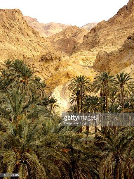 palm trees growing against rocky mountains - tunis stock pictures, royalty-free photos & images