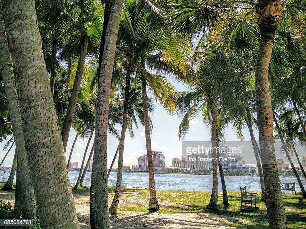 Palm Trees Growing Against Sea