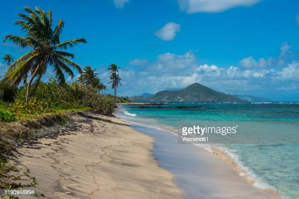 palm trees growing at beach against blue sky, saint kitts and nevis, caribbean - west indies stock pictures, royalty-free photos & images