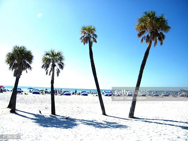 Palm Trees Growing At Sandy Beach Against Clear Blue Sky