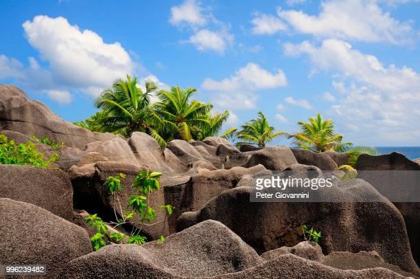 Palm trees growing between the granites rocks, La Digue Island, La Digue and Inner Islands, Seychelles