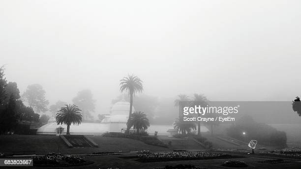 Palm Trees Growing By Lake At Golden Gate Park During Foggy Weather