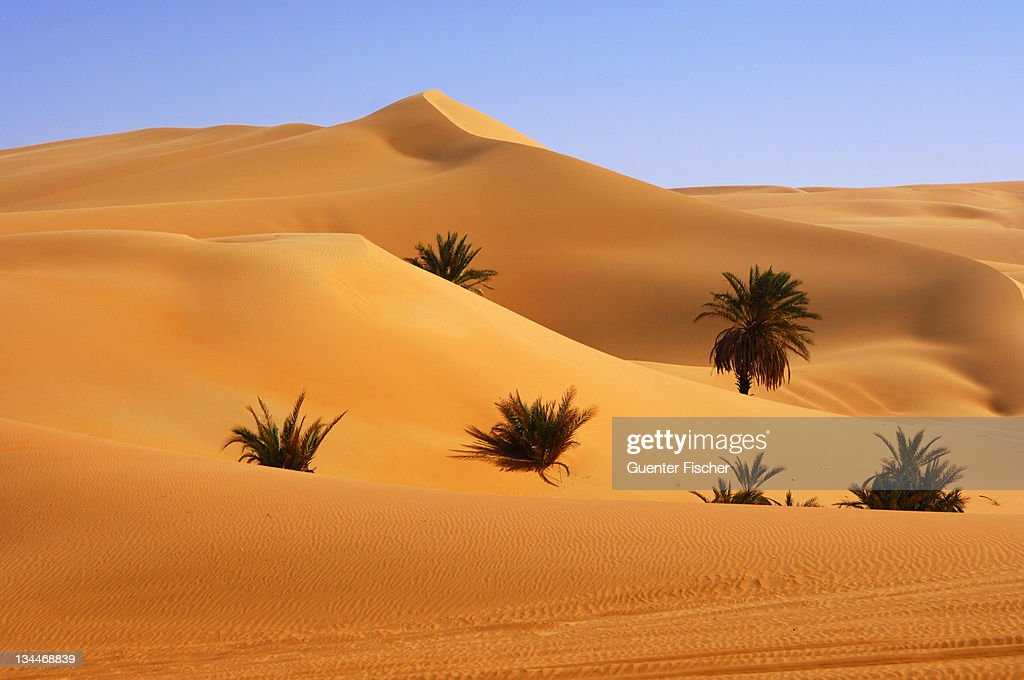 Palm trees growing in the hot desert sand, Mandara Valley, Ubari Sand Sea, Sahara, Libya, North Africa, Africa