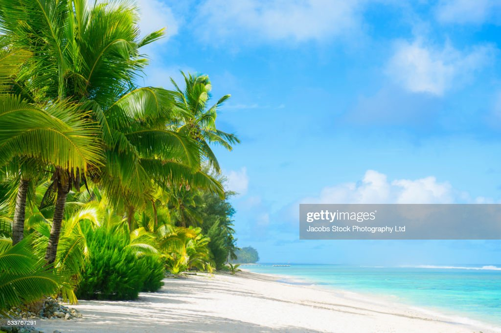 Palm trees growing on tropical beach : Foto stock