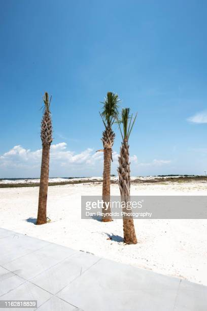 palm trees hdr - destin beach stock pictures, royalty-free photos & images