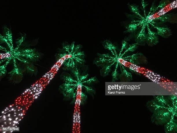 Palm trees illuminated at Christmas