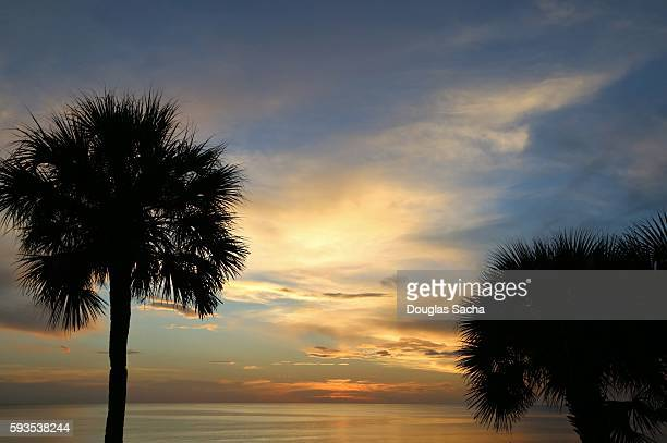 Palm Trees in a colorful Sky at Clam Pass Park, Naples, Florida, USA