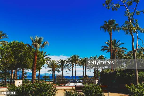 Palm trees in a Mediterranean city garden in Antibes