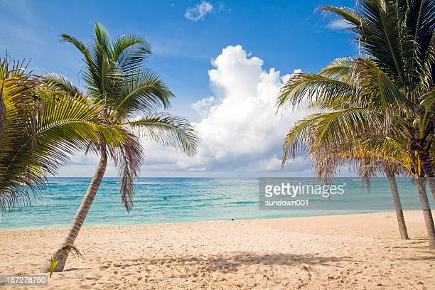 3 palm trees in a serene beach scene - mayan riviera stock photos and pictures