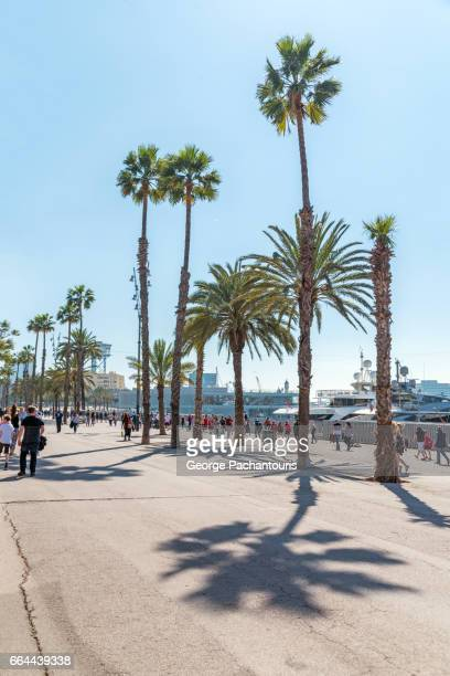 palm trees in barceloneta, barcelona, spain - la barceloneta stock pictures, royalty-free photos & images